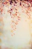 与秋天叶子的垂悬的分支在被弄脏的自然背景, patel减速火箭的颜色 免版税库存图片