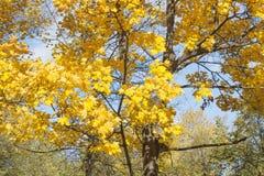 与秋天叶子的背景 图库摄影
