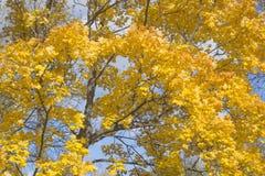 与秋天叶子的背景 库存图片