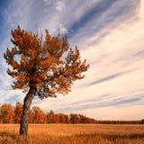 与秋天天空的孤立结构树 免版税库存照片