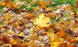 与秋天树下落的叶子的装饰背景纹理的宏观照片  库存图片