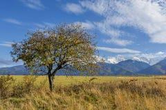 与秋天树和下落的叶子的美好的风景有喀尔巴阡山脉的在背景中 免版税库存图片