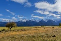 与秋天树和下落的叶子的美好的风景有喀尔巴阡山脉的在背景中 免版税库存照片