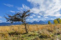 与秋天树和下落的叶子的美好的风景有喀尔巴阡山脉的在背景中 免版税图库摄影