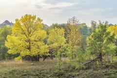 与秋天树的农村风景 10月树 库存照片