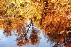 与秋天树的反射的水 库存照片