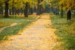 与秋天树的方式在公园,绿草和黄色叶子 库存图片