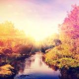 与秋天树的美妙的风景在森林里,在河 免版税库存图片
