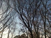 与秋天树的自然蔓藤花纹 图库摄影