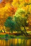 与秋天树的水在公园 免版税图库摄影