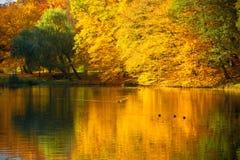 与秋天树的水在公园 库存图片