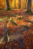 与秋天森林的横向 秋天美丽的结构树 库存照片