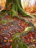 与秋天森林的横向 秋天美丽的结构树 图库摄影