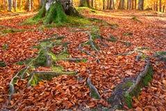 与秋天森林的横向 秋天美丽的结构树 库存图片