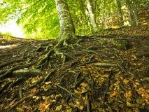 与秋天森林的横向 图库摄影