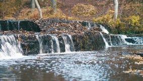 与秋天森林的美丽的森林河急流 股票录像