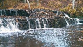 与秋天森林的美丽的森林河急流 股票视频