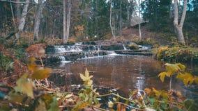 与秋天森林的美丽的森林河急流 影视素材
