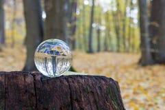 与秋天森林的玻璃透明球 免版税库存图片