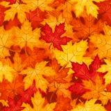 与秋天槭树叶子的向量无缝的模式。 免版税图库摄影