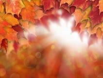 与秋天槭树叶子的秋天背景,太阳光 免版税图库摄影