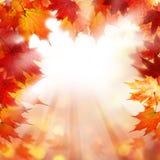 与秋天槭树叶子的秋天背景 库存照片