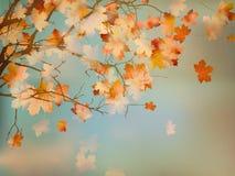 与秋天槭树叶子的背景。EPS 10 免版税图库摄影