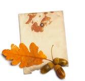 与秋天橡木叶子的老难看的东西纸 库存图片
