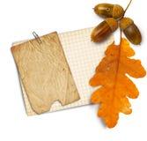 与秋天橡木的老难看的东西纸在白色离开和橡子 库存照片