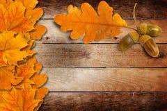与秋天橡木的老难看的东西纸离开和橡子 免版税库存图片