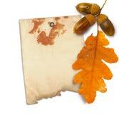 与秋天橡木的老难看的东西纸离开和橡子 库存图片