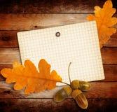 与秋天橡木的老难看的东西纸离开和橡子 图库摄影