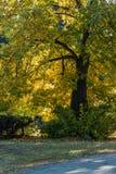 与秋天混合 免版税库存照片