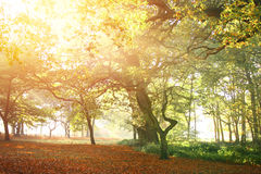 与秋天的树清早上色薄雾 免版税库存照片