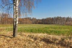 与秋天的桦树在设置老篱芭和领域在距离的国家上色丢失他们的叶子 免版税库存图片