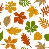 与秋天秋叶的无缝的样式在白色 免版税图库摄影