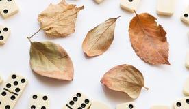 与秋天秋天叶子的多米诺 库存照片