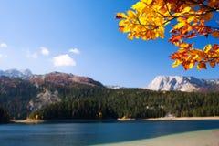 与秋天结构树的岩石横向 库存图片