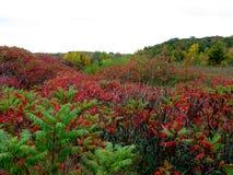 与秋天股票照片的颜色的一个领域 免版税库存照片