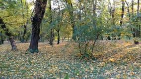 与秋天自然的移动的背景在4K英尺长度 股票视频