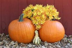 与秋天花的两个橙色南瓜 库存照片