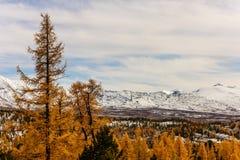 与秋天落叶松属的山风景 库存图片
