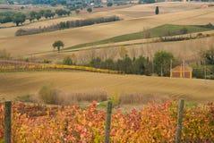与秋天葡萄园的翁布里亚风景在10月 免版税库存图片