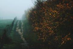 与秋天道路的有雾的领域 免版税库存图片