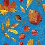 与秋天集合的传染媒介无缝的样式离开,坚果,树 库存照片