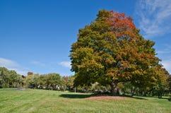 与秋天颜色的壮观的结构树 免版税库存照片
