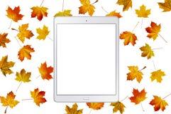 与秋天颜色被隔绝的槭树叶子和片剂个人计算机的样式  免版税库存图片