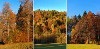 与秋天颜色-特伦托自治省意大利的树 图库摄影