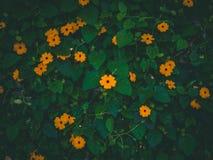 与秋天Vibe的橙色绿色花 图库摄影