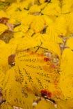 与秋季叶子的波斯铁木树树 免版税库存照片